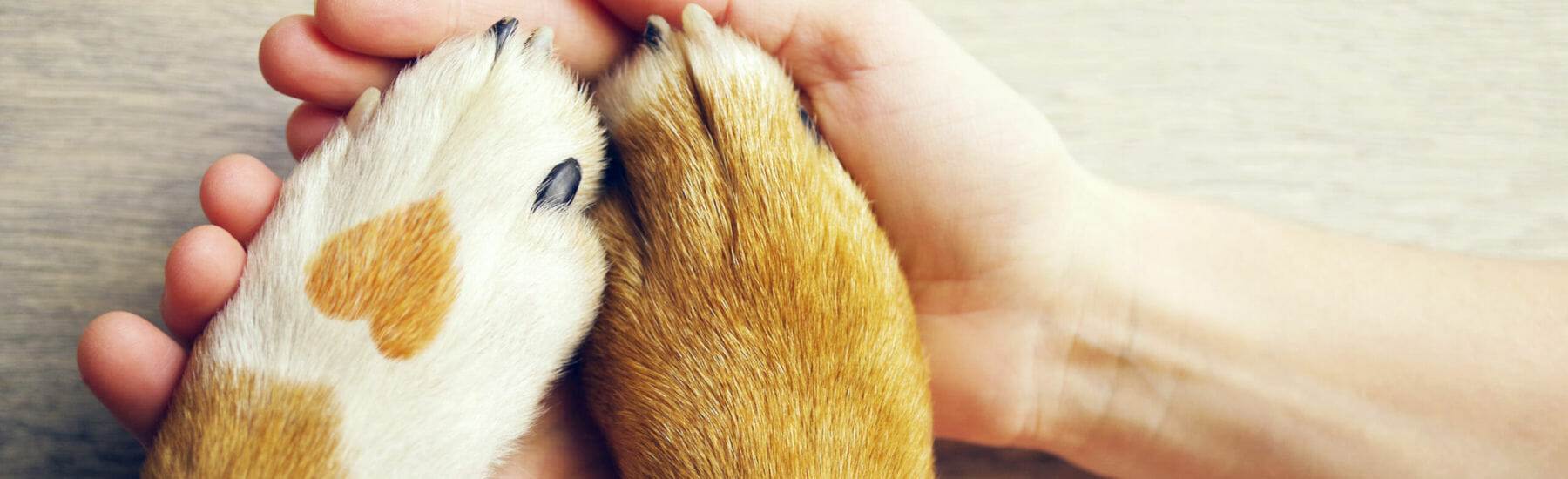 Human hands holding dog paws with a heart on the fur