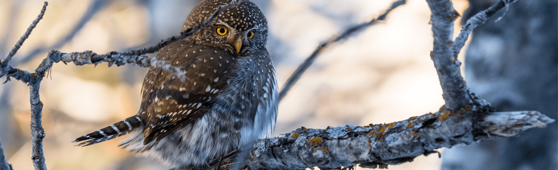 Small owl perched on a frosty branch